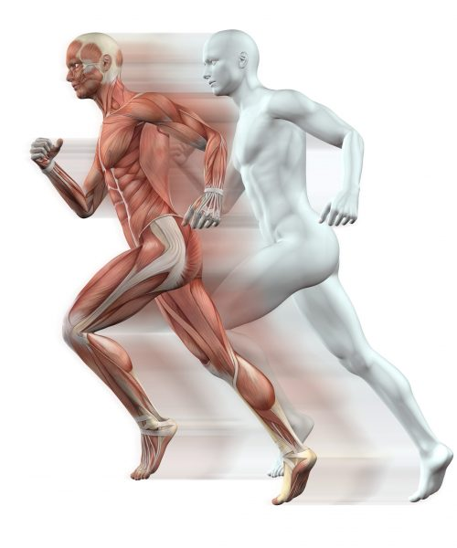3D render of male figures running with skin and muscle map